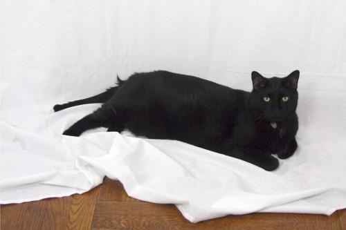 Angela's cat Clarence, who surveyed the scene.